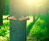 Hands hugging trunk of tree. Hands hugging a trunk of a tree in summer park or forest with sunlight. Ecology, loving nature concept Stock Images