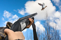 Hands of hunter shooting from shotgun to flying duck. Closeup Royalty Free Stock Image