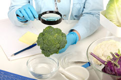 Hands inspecting broccoli in phytocontrol laboratory Stock Images