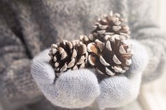 Hands in knitted mittens holding cones. Hands in blue knitted mittens holding cones Royalty Free Stock Image