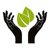 Hands with leaf vector symbol. Stock Image