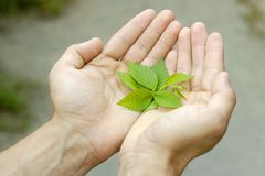 Hands with life Royalty Free Stock Photo