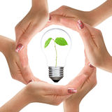 Hands and light bulb with plant inside Royalty Free Stock Images