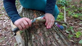 Hands of little girl or boy using a Swiss knife, sawing a piece of wood in the forest, nobody. Hands of little girl or boy using a Swiss knife, sawing a piece of stock footage