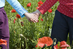 Hands of little girl and red poppy Royalty Free Stock Photos