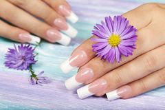 Hands with long artificial french manicured nails. And violet flower Stock Images