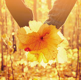 Hands of loving couple with autumn leaves Stock Photo