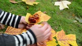 Hands make decor flower beautiful autumn tree leaf. Hands make decor flower from beautiful autumn tree leaf stock video footage