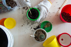 Hands make a hole  in a pot with soil for planting cactus Royalty Free Stock Photo