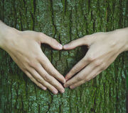 Hands making heart shape on tree Stock Images