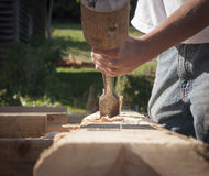 Hands with Mallet and Chisel Hollowing Out Mortise. Timber framing tools, the mallet and chisel being used to remove wood from the mortise in a wooden beam Stock Photography