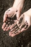 Hands of a man covered with black soil on a background of soil stock images