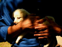Hands of man holding puppy dog Stock Photo