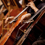 Hands of the man playing the cello stock image