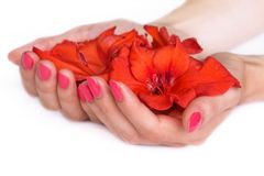 Hands with manicure holding lilies Stock Photos