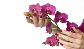 Hands with manicure holding orchid Royalty Free Stock Images