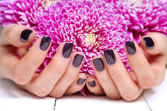 Hands with manicure and pink flower Royalty Free Stock Photography