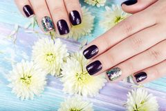 Hands with manicured nails colored with dark purple nail polish. And white daisy flowers stock photography