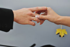 Hands of a married couple with golden rings Royalty Free Stock Images