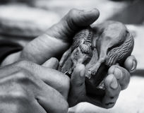 Hands of the master Stock Photography