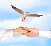 Hands of men and women. Holding each other against a bird in the sky royalty free stock photo