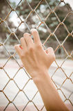 Hands with Mesh cage, Hands with steel mesh fence Stock Photography