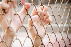 Hands with Mesh cage, Hands with steel mesh fence Stock Photo