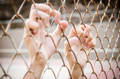 Hands with Mesh cage, Hands with steel mesh fence Royalty Free Stock Image