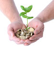 Hands money growth Royalty Free Stock Image