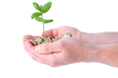 Hands money growth Royalty Free Stock Photography