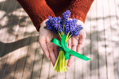 Hands with muscari Stock Photo