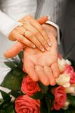 Hands of newly-married Royalty Free Stock Photos