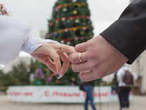 Hands of newly wedded on background of New Year tree Stock Image