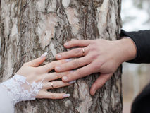 Hands of newly wedded on background of  trunk of pine Stock Photos
