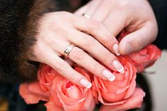 Hands newlyweds on a bouquet of roses Royalty Free Stock Image