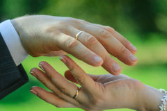The hands of the newlyweds. Hands of newlyweds with rings on green background Royalty Free Stock Photo