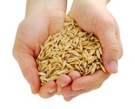 Hands with oats seeds Royalty Free Stock Photos