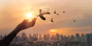 Free Hands Of Woman Praying And Free Bird Enjoying Nature On City Sunset Background, Hope Concept Royalty Free Stock Photography - 154742207