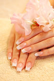 Hands Of Young Woman With French Manicure Royalty Free Stock Photos