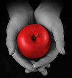 Hands Offering Red Apple Stock Image