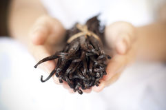Hands offering vanilla beans. Vanilla beans being held by female hands, which are blurred. The front of the vanilla beans are in focus Stock Photography