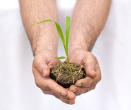 Hands offering a young plant Royalty Free Stock Image