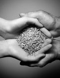 Hands of the old and the young man. With the grain. Black and white. top view Royalty Free Stock Photo