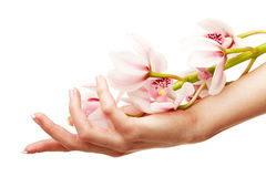 Hands and orchid Stock Images