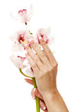 Hands and orchid Royalty Free Stock Photography