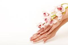 Hands and orchid Royalty Free Stock Photo