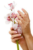Hands and orchid Stock Photography