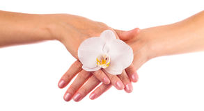 Hands with orchid Stock Photos