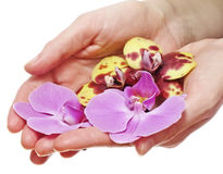Hands with orchids Stock Images