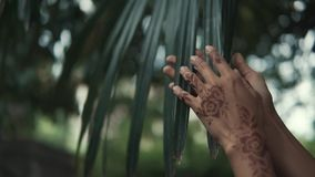 Hands of oriental woman are stroking green leaf of tropical palm tree, close-up. Female hand with henna ornaments on skin is touching large leaves of palm. Close stock video footage